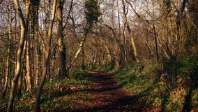Path through the woods at sunset. Pretty rural scene of woodland path in evening sunlight stock video footage