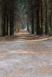 Path Through the Woods on a Suny Day.Ukraine. Path Through the Woods on a Suny Day Stock Photos