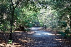 Wooded path royalty free stock images