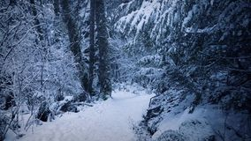 Path Through The Woods In Thick Snow stock video footage
