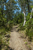 Path Through the Woods. Path to Thunderbolts Lookout, Barrington Tops National Park, NSW, Australia Royalty Free Stock Image