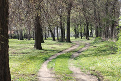 Path through the woods. Two small road through the woods Royalty Free Stock Image