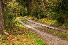 Path in the woods. Way out of the mud in the woods Royalty Free Stock Photography