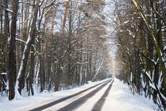 Path in the woods in winter Stock Image