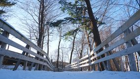 Path in the woods. Wooden path through the trees, a winter day under a beautiful blue sky royalty free stock photos