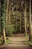 Path in Woods. Woodland is a low-density forest forming open habitats with plenty of sunlight and limited shade. Woodlands may support an understory of shrubs Stock Image