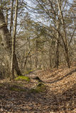 Path through the woods. The path through the woodlands in Matthiessen State Park, Utica, Illinois at the beginning of Spring Stock Photography