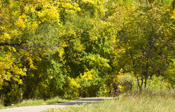 Path Through Yellow Autumn Foliage royalty free stock photo