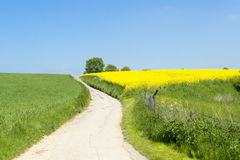 Path between yellow rape and blooming meadows Stock Photo