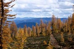 Path through yellow trees to mountains. Stock Image