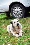 Pathetischer Hund Lizenzfreie Stockfotos