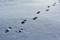 Pathfinder. Traces of a lone traveler walking through a snowy field Stock Photography