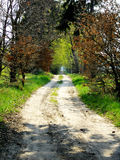 Pathless tracts conceptual image. Picture of road in green forest Royalty Free Stock Images