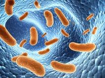 Pathogen bacteria Stock Photos