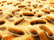 Pathogen bacteria on the surface Stock Images