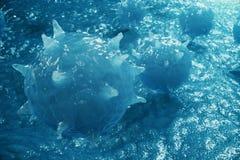 pathogene Viren der Illustration 3D, die Infektion im Wirtsorganismus verursachen Virenkrankheitsepidemie Virus-abstrakter Hinter Stockbild