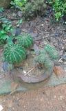 Pathok träd 2 Royaltyfri Fotografi