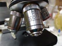 Pathologie ?lectrique de lentille de microscope photo stock