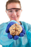 Pathologist holding a brain in her hand. Female pathologist or medical technologist holding a brain in her hand extended towards the camera, isolated on white Stock Photos
