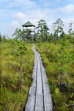 Paths in the bog. Stock Photography