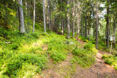 Paths. Leading Through Lush Woods Royalty Free Stock Photography
