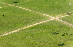 Paths on the meadow. Crossing paths on the meadow Stock Photo