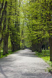 Paths through the park. Park bench at the end of a gravel path in a park Stock Photos