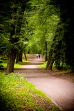 Paths in the park Royalty Free Stock Photo