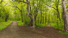 Paths and signpost in the Vienna Woods Stock Photo