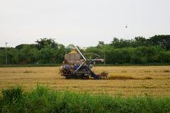 Pathum Thani, Tailândia 8 de julho de 2018: As ceifeira tailandesas da movimentação do fazendeiro dão o arroz no campo em Tailând fotografia de stock