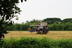 Pathum Thani, Tailândia 8 de julho de 2018: As ceifeira tailandesas da movimentação do fazendeiro dão o arroz no campo em Tailând imagens de stock