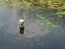 Pathumthani реки Rangsit Стоковые Изображения RF