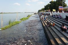 Pathumthani, Таиланд - 1-ое января Стоковые Фотографии RF