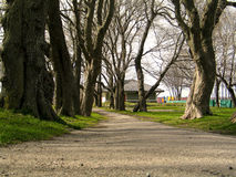 Pathway. Gravel road pathway, surrounded by green grass and tall trees royalty free stock photos