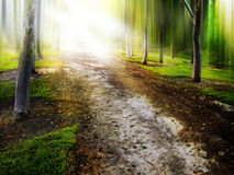 Pathway Royalty Free Stock Photos