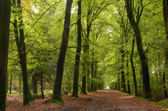 Free Pathway Stock Photo - 16528730