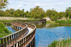 Pathway. Wooden bridge on the lake on Daimiel Natural Park Stock Photography