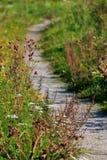 pathway Imagens de Stock