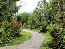pathway zdjęcie royalty free