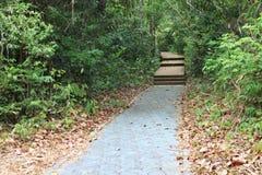 pathway Obraz Royalty Free