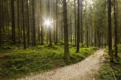 Pathway Royalty Free Stock Image