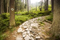 Pathway Royalty Free Stock Photography
