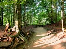 pathway Obraz Stock
