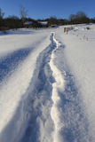 Pathway across winter meadow. Pathway on snovy meadow in rural Royalty Free Stock Image