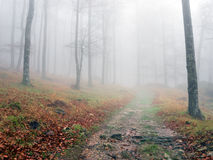 Pathway in autumn beech forest Stock Photos