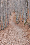 Pathway on a autumn beech forest landscape. Tejera Negra. Spain Royalty Free Stock Photography