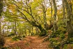Pathway in the autumn enchanted forest, Monte Cucco, Umbria stock images