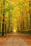 Pathway in the autumn forest. Frankfurt Stock Photography