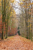 Pathway in the autumn forest. Frankfurt Royalty Free Stock Image