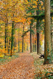 Pathway in the autumn forest. Germany Royalty Free Stock Photo